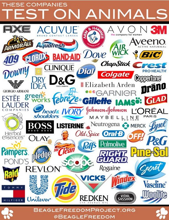 What are some good reasons not to buy products tested on animals?